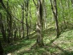 Skroblynų buveinė Mergiškių miške