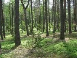 Vakarų taigos buveinė Spindžiaus miške